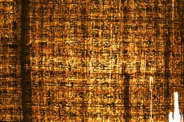 Papyrus in Transmitted Light