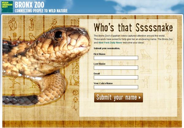 Bronx Zoo - Name that Snake