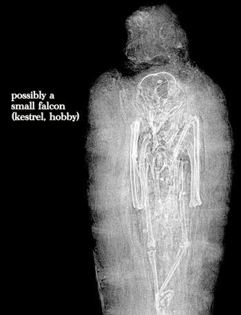 Falcon X-ray