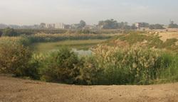 reeds_east.jpg